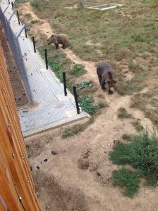 bears 3